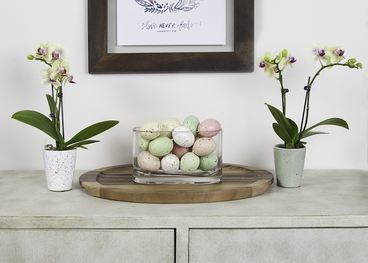 Add Orchids to Your Easter Decor