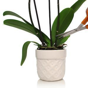 How to Disinfect Your Orchid Supplies and Pots