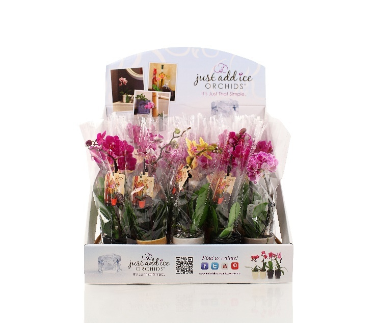 Come See Just Add Ice's New Flower Shop in a Box'