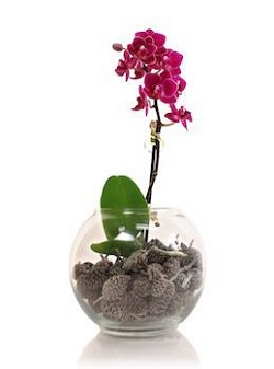 4 Ways to Give Orchids this Holiday Season