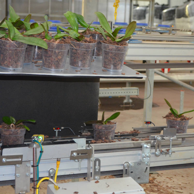 Why Greenhouse Robots Are A Good Thing