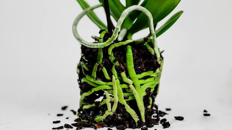 Home Remedies 101: Hydrogen Peroxide
