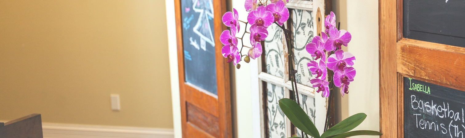 product-carousel-orchids-4.jpg