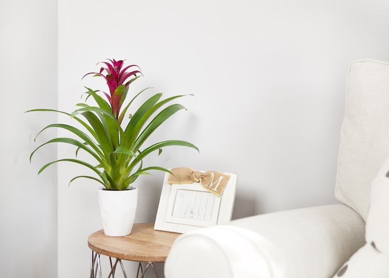 3 Low Light Houseplants That Thrive Almost Anywhere
