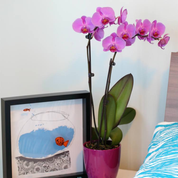 Five Low-Maintenance Plants For Your Child's College Dorm