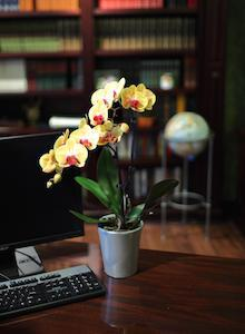 Why You Should Use Mini Orchids for Your Next Corporate Event