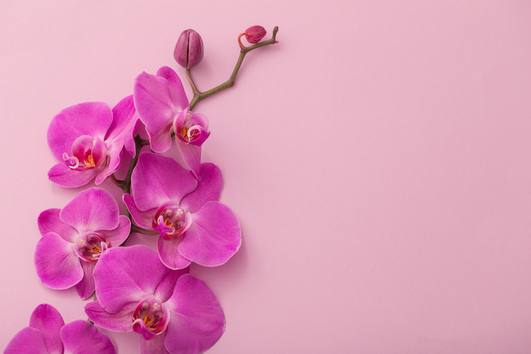 Orchid Color Sends a Special Message on Valentine's Day
