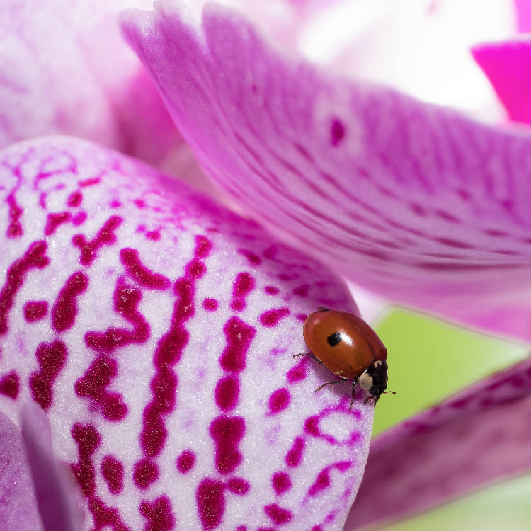 Orchid Bugs That Are Good For Your Plant