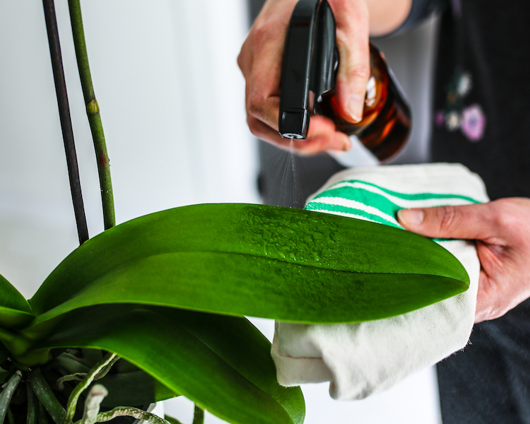 How Can I Use Natural Remedies to Keep Away Insects and Fungus From My Orchid?