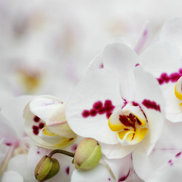 Orchid Care: How to Care for Your Orchid in 6 Easy Steps