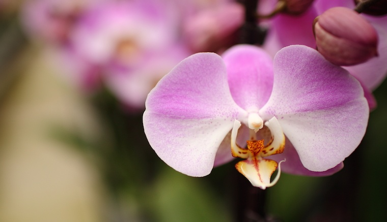 How To Keep Orchid Pests From Ruining Your Plant This Summer