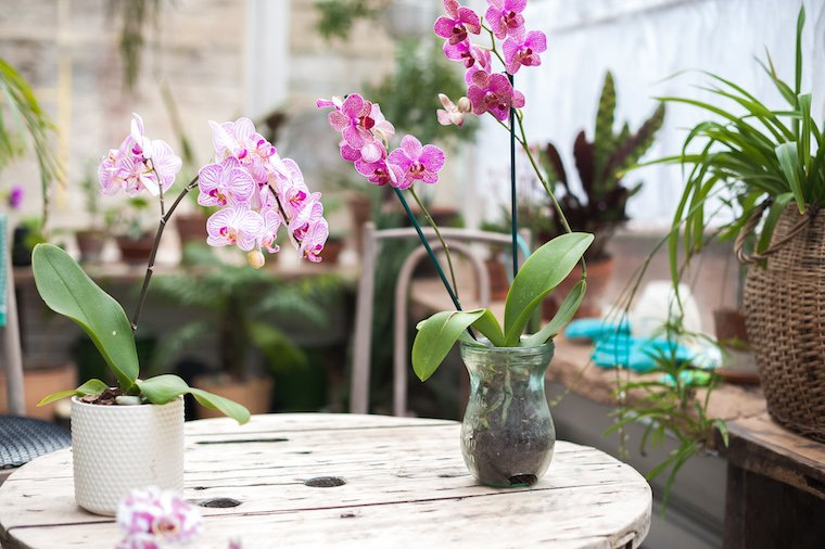 Celebrate Love with Just Add Ice Orchids this Valentine's Day