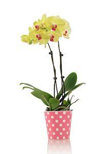 I Got an Orchid for Easter! Now What?