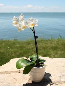 3 Ways Your Orchid Can Help Welcome Summer With Open Arms
