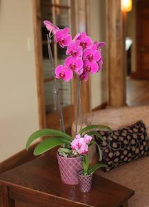 Orchid Care Between the Seasons: What You Need to Know