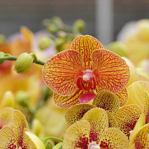 Top 4 'Uncommon' Orchid Care Questions Answered
