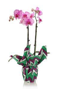 Orchids Make the Perfect Gift for These Overlooked March Holidays