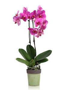 5 Ways to Make Orchids Part of Your St. Patrick's Day Celebration