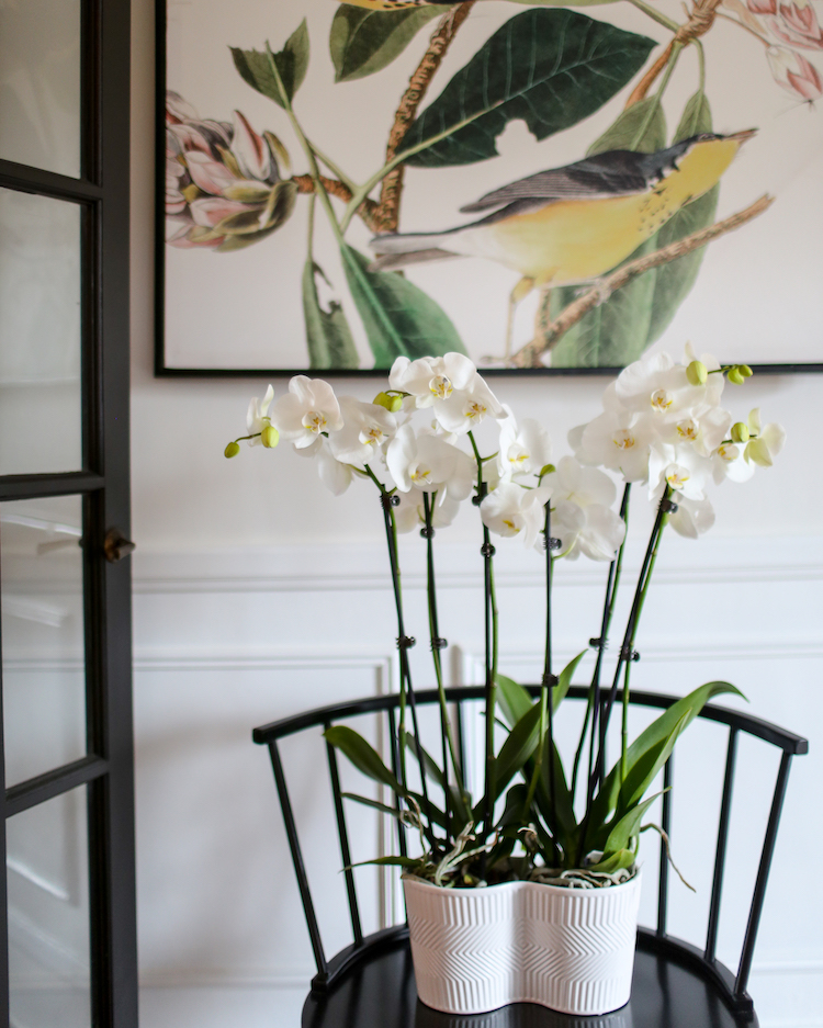 Caring for your Orchid When It's Cold Outside