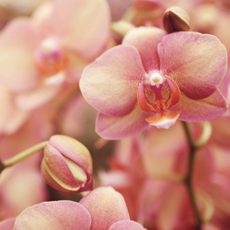 Where to Find Orchids Near You
