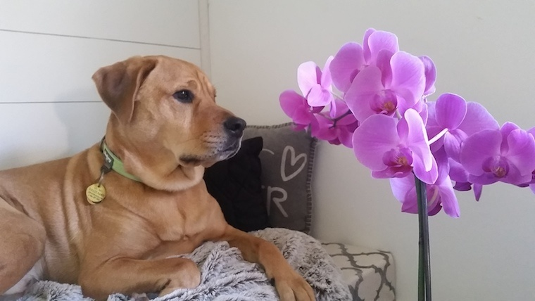 Which Houseplants Are Safe for Your Pets?