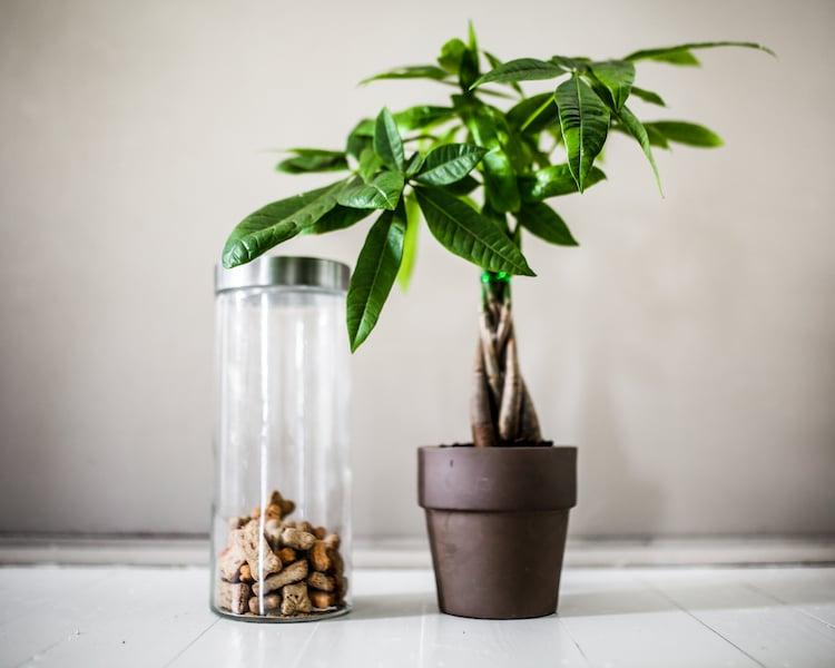 Low-Maintenance, Pet-Friendly Plants for Your Home