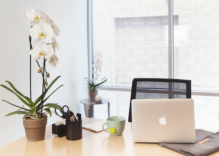 Why You Need More Plants in the Workplace (According to Science)