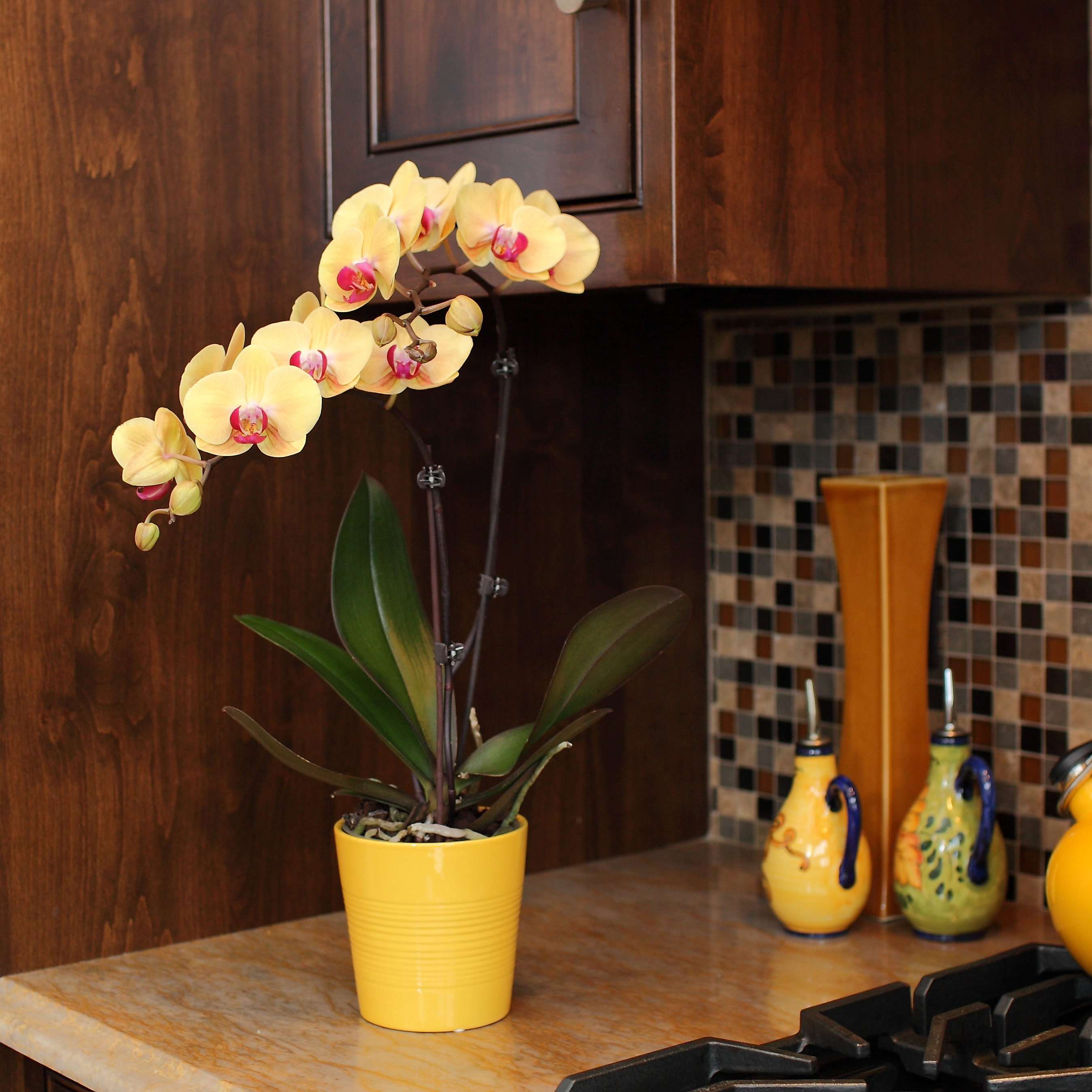 Selling Potted Indoor Plants vs. Fresh Flowers
