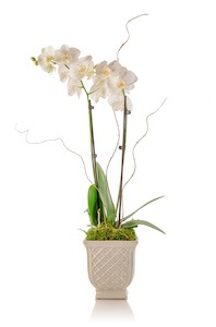 How to Turn Your Store Bought Orchid into a Stunning Arrangement