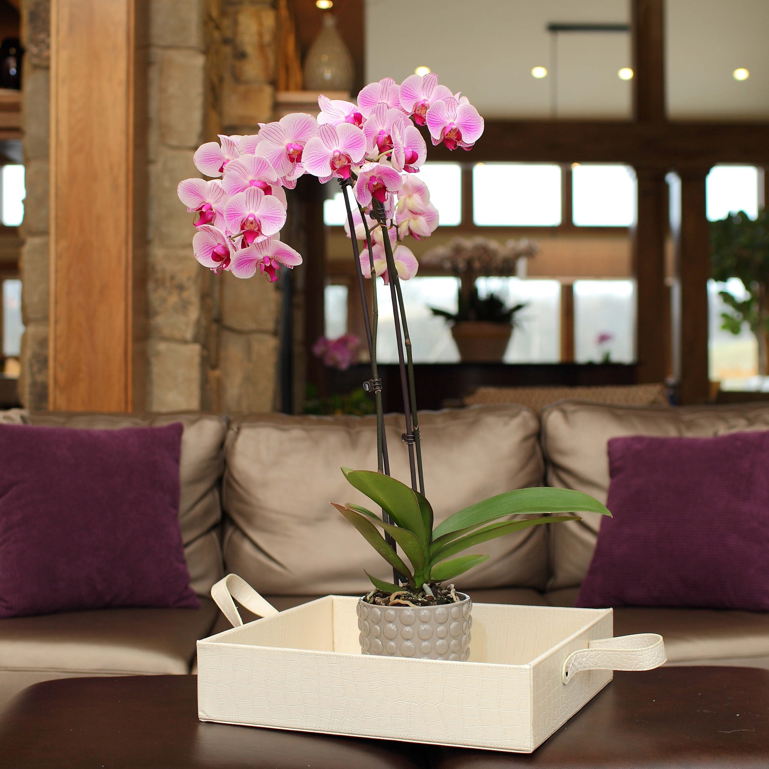 When is the Best Time for Repotting Orchids?