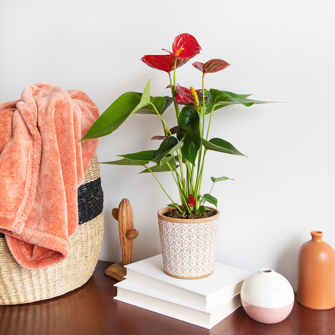 anthurium-winter-care