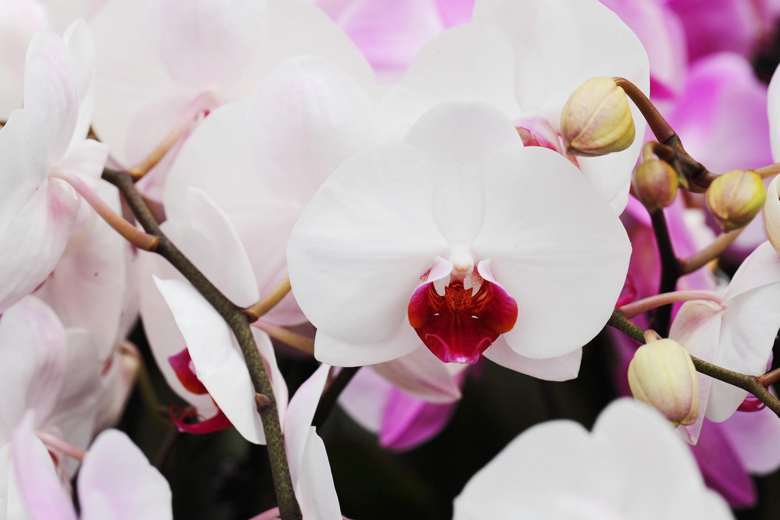 6 Types of Orchids Disguised as Animals
