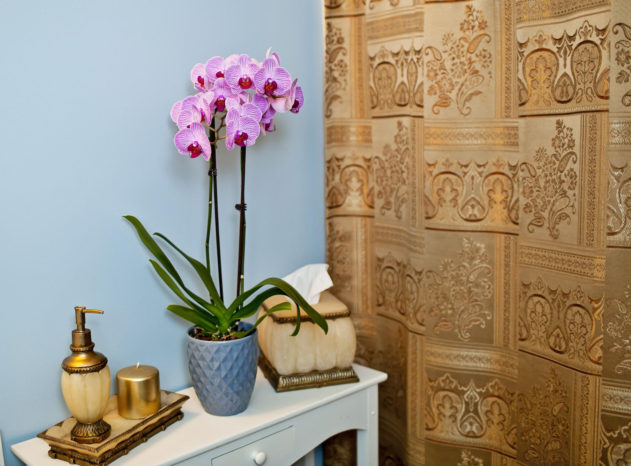 Discover Different Types of Orchids