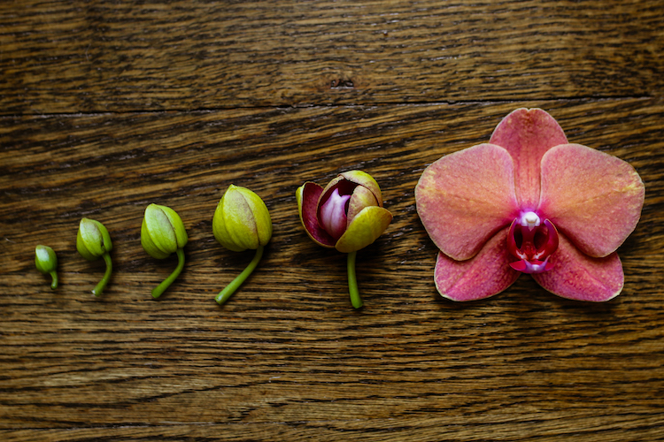 'Uncommon' Orchid Care Questions Answered